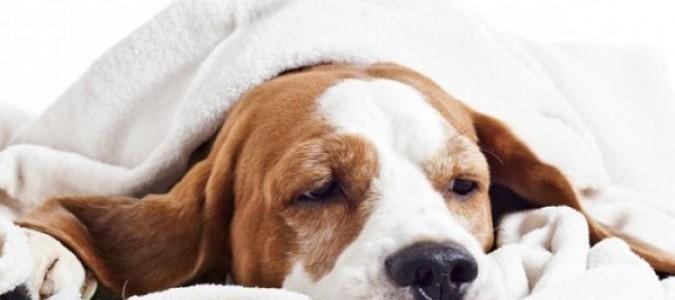 Рвота у таксы -4. Как вызвать рвоту у собаки.