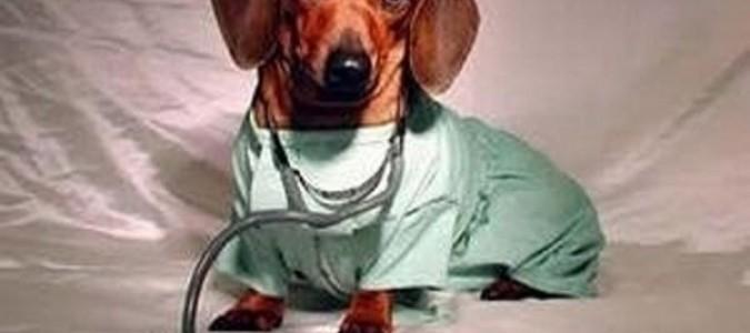 Глисты у таксы -8. Как давать собаке таблетки от глистов?