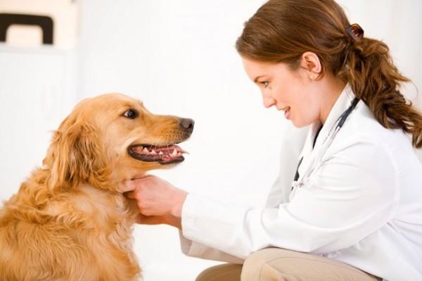 прививка от глистов собаке