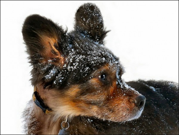 перхоть у собаки причины и лечение фото