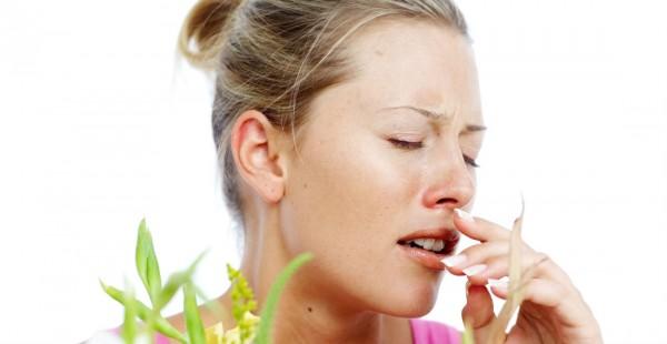 Аллергия на собак. Тримминг как способ решения проблемы
